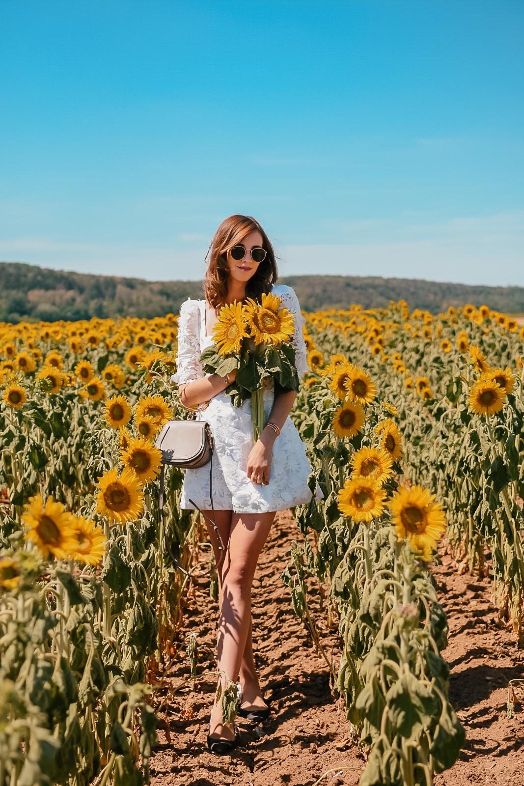 sunflower5-2
