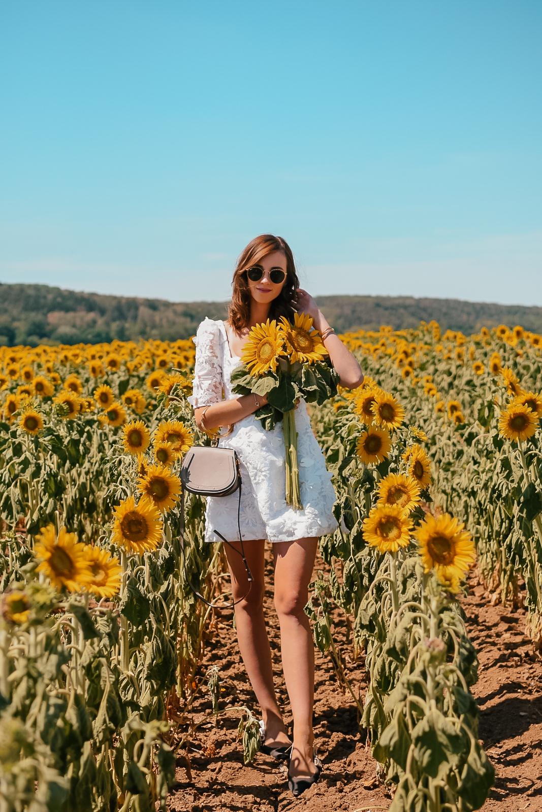 sunflower4-2