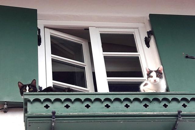 Neugierig spähen die beiden jungen Katzen von ihrem Platz im Balkonkasten auf die Straße hinunter.