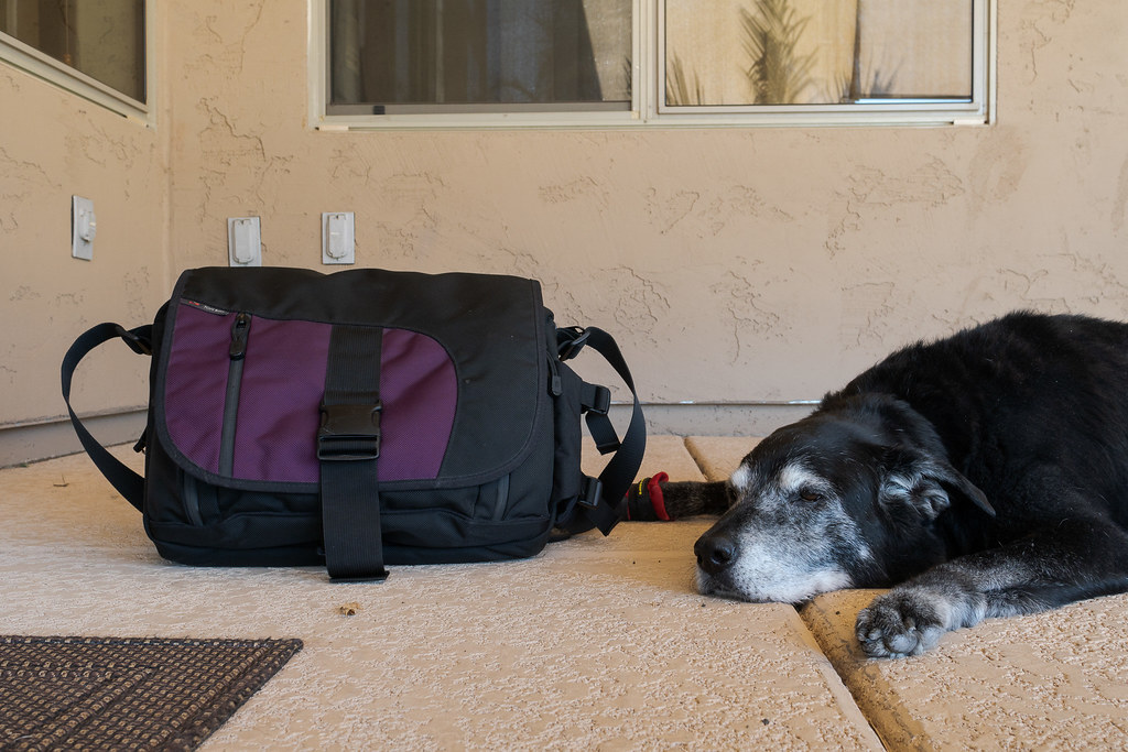A close-up of our dog Ellie sleeping beside my Tom Bihn ID laptop bag on our porch at our new house in March 2019