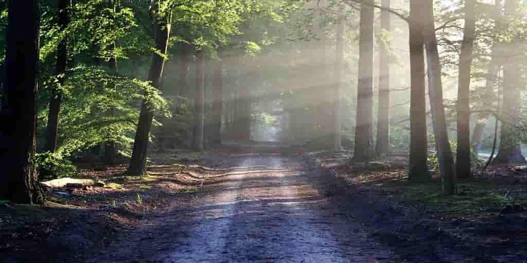 ajout-forêt-lutter-changement-climatique
