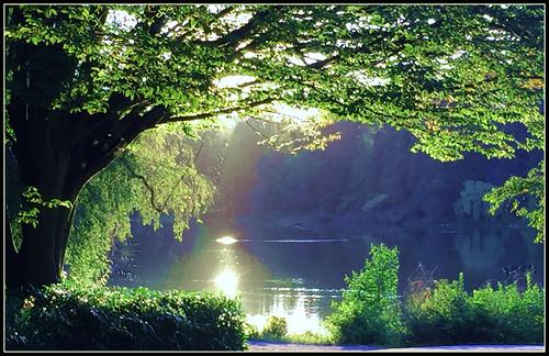vancouverbc stanleypark lostlagoon scenery scenic lake park trees sunlightonwater nature outdoor