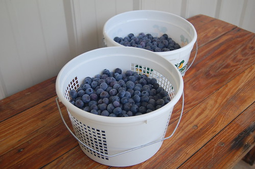 Bluberries how to freeze