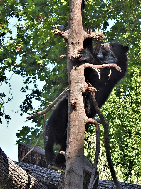 On the trees their monkey er bears the forest is swept.  -Zoo FFM (27)B