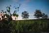 Passeggiata primaverile al tramonto tra i vigneti della Franciacorta