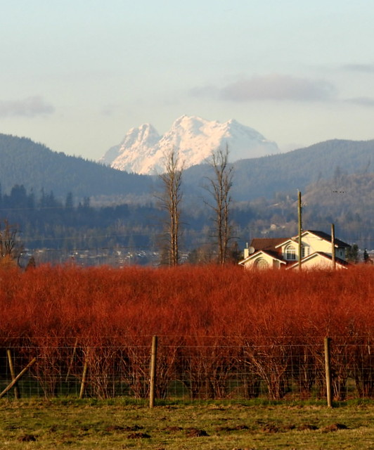 A PASTURAL SCENE WITH SUNLIGHT HIGHLIGHTING A BEAUTIFUL MOUNT ROBBIE READ.  A FARM NEAR MATSQUI PRAIRIE,  BC.