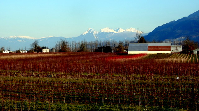 A FARM AND MOUNT CHEAM,  CASCADE MOUNTAINS,  AS SEEN FROM DEROCHE, NEAR MISSION,  BC.
