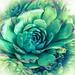 07042019_succulent-1005