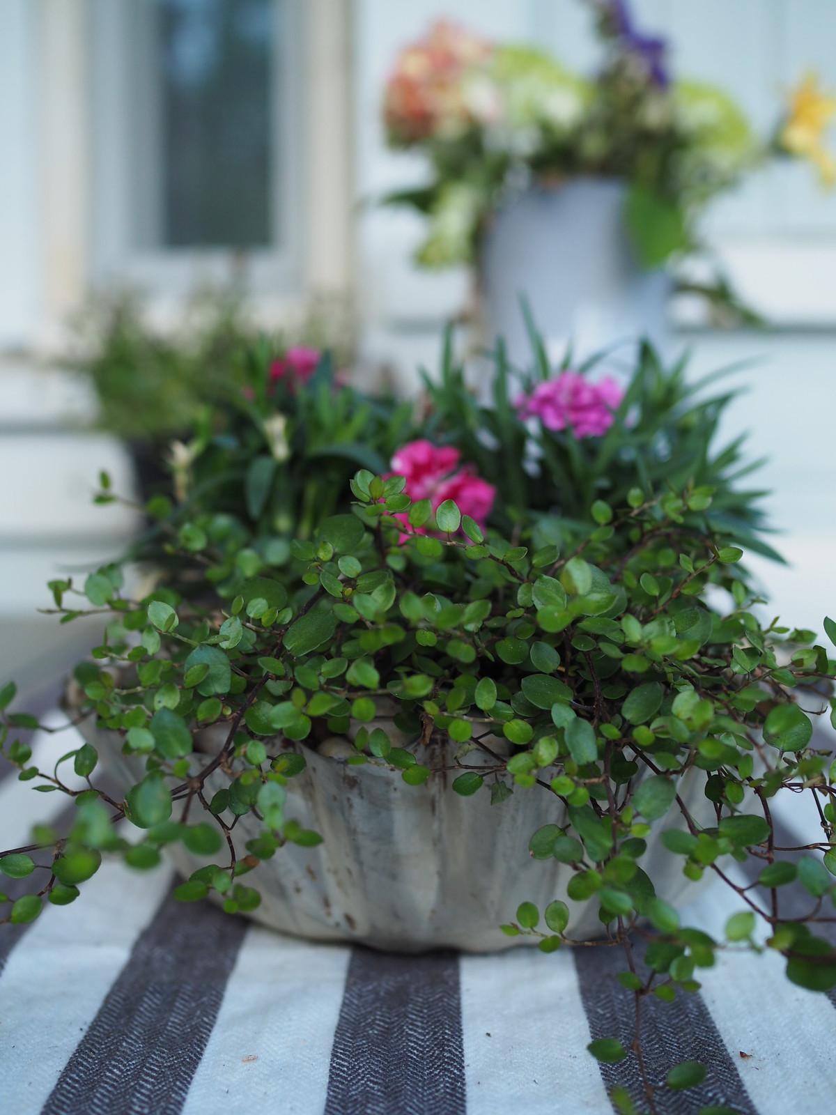 kukka-asetelma-kakkuvuoassa