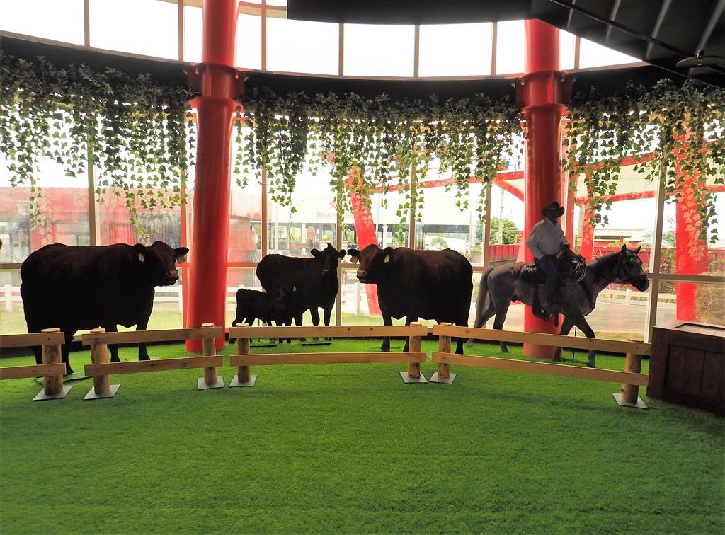 燕巢裕賀牛 (3)