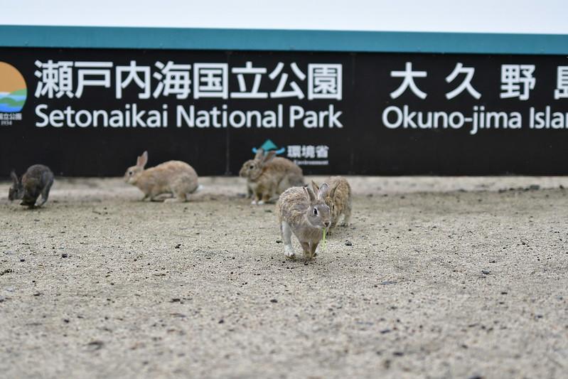 うさぎの楽園 大久野島