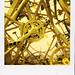 Yellow Bikes (Brussels)