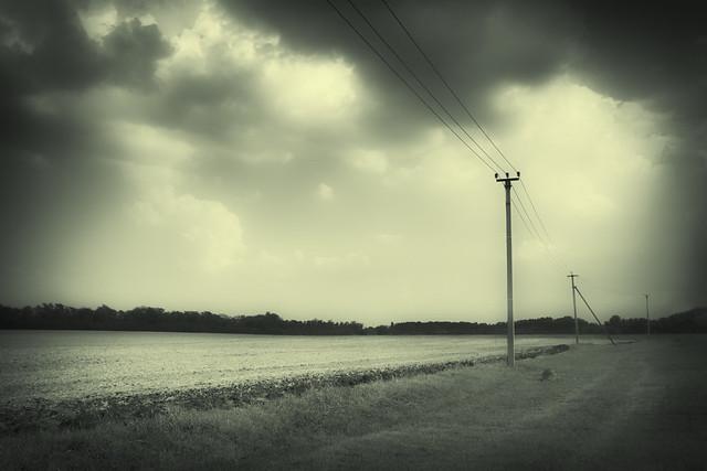 empty fields of green