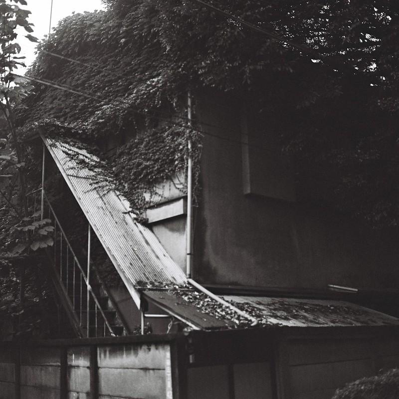 Rolleiflex 2 8F+ILFORD XP2 400池袋三丁目谷端川緑道の蔦の絡まる家