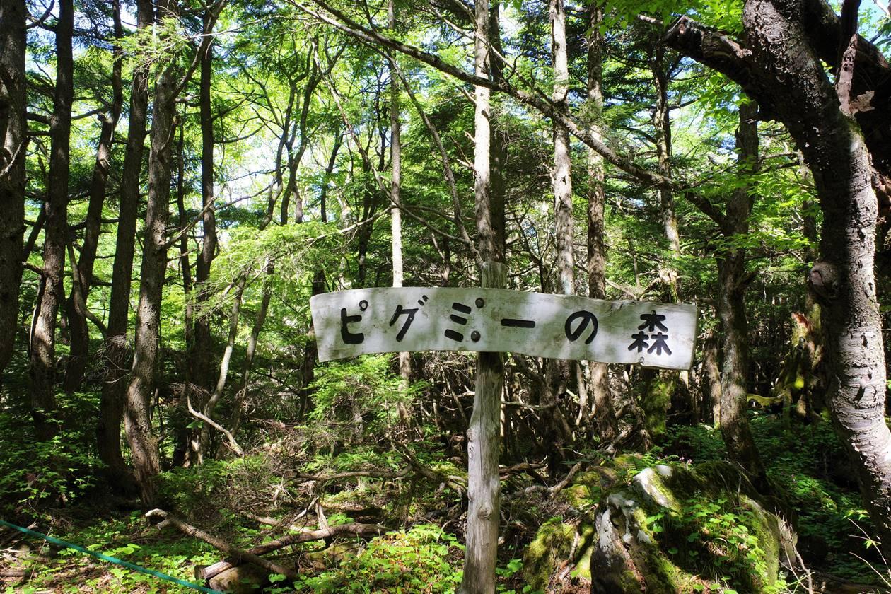 池ノ平湿原・ピグミーの森