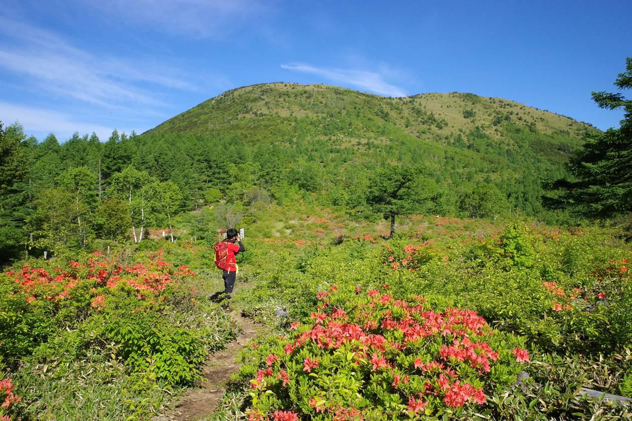 湯ノ丸山登山 レンゲツツジ祭り