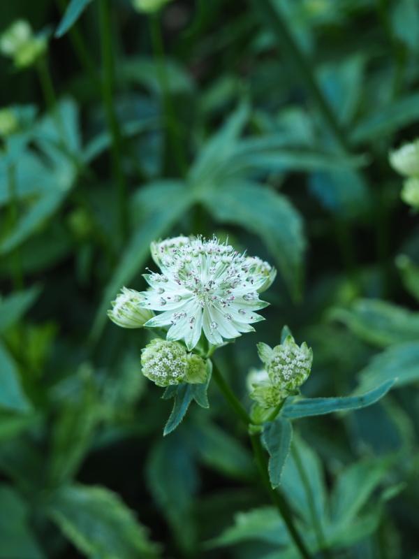 Récolte des semences, plante par plante - Page 5 48204542991_f177b8bca4_o
