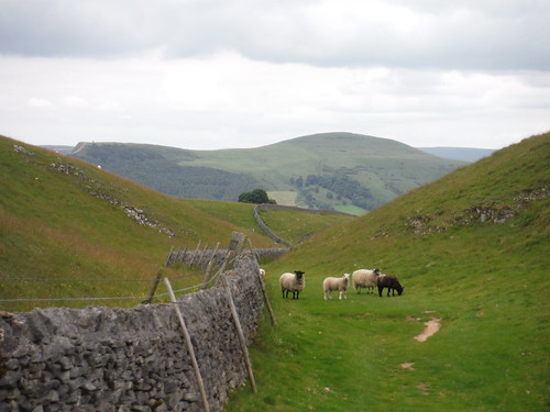 Through Pastures, direction Great Ridge (Back Tor and Lose Hill) SWC Walk 343 - Hope to Hathersage or Bamford (via Castleton)