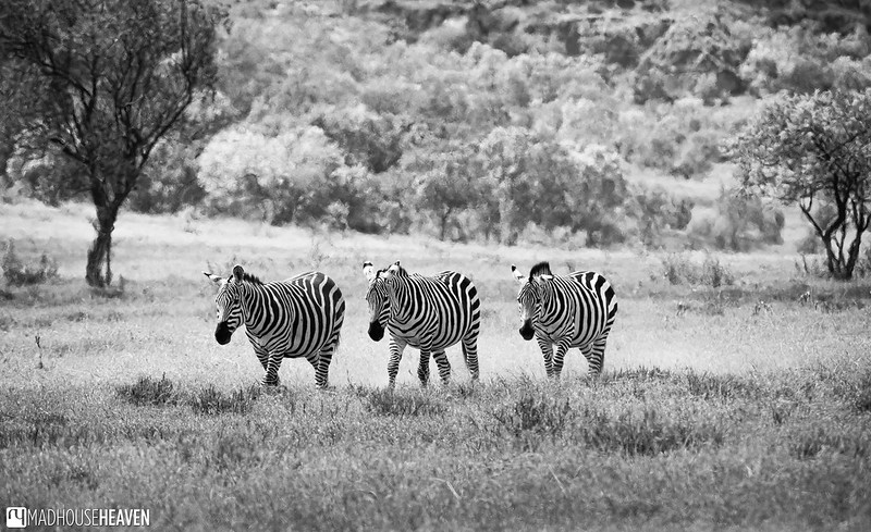 Kenya - 2100