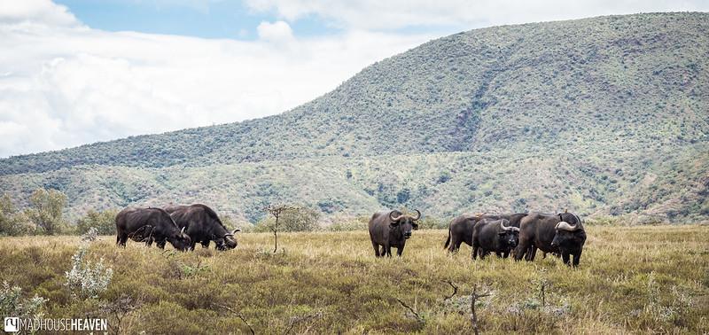 Kenya - 2270