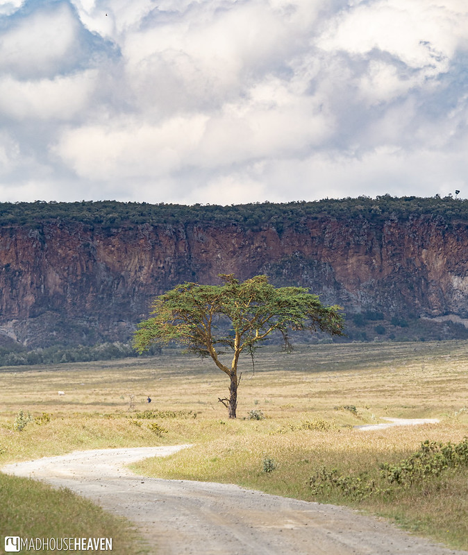 Kenya - 2096