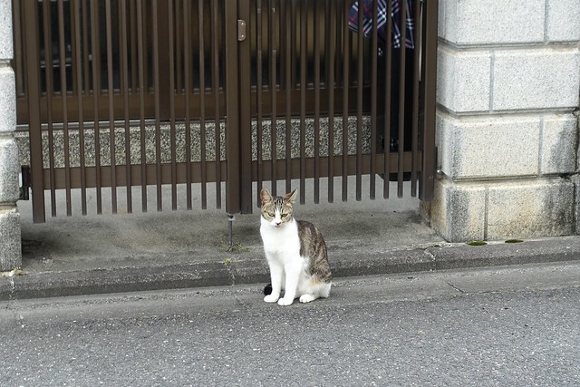 Today's Cat@2019-07-05