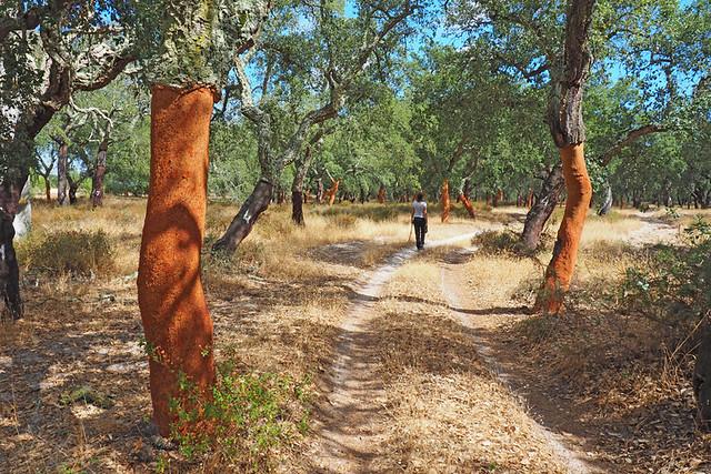 Cork forest, Palmela, Portugal