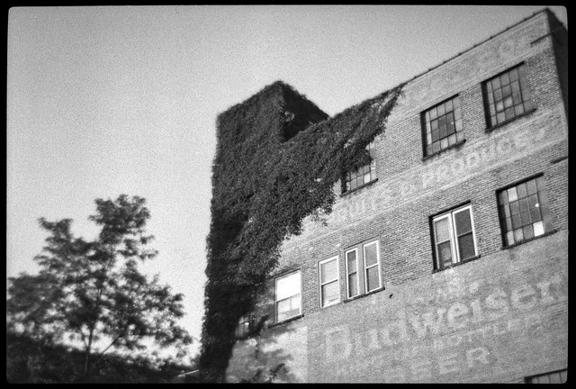 old industrial architecture, brick, ivy-covered, River District, Asheville, NC, Bencini 24S, Bergger Pancro 400, HC-110 developer, 7.1.19