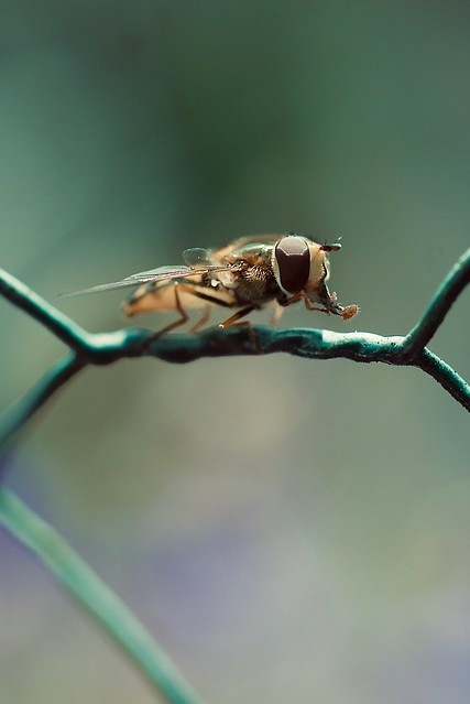 Lil'fly on a wire