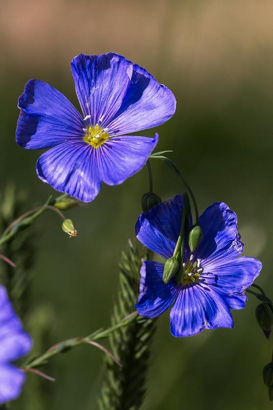 Wild-Flower-15-7D1-062819
