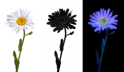 Floral Perception