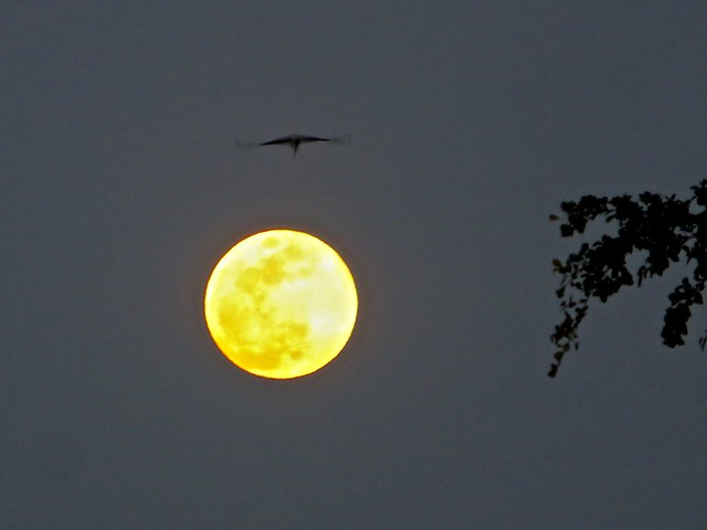 moon and gull