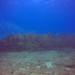 2019-07-04 Key Largo Reef Dives