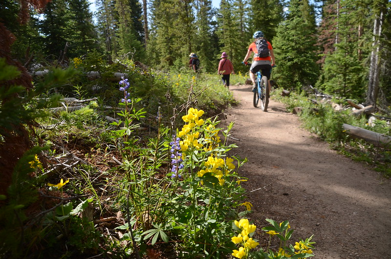 Fraser Experimental Forest trail, Fraser, Colorado (112)