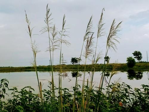 bangladesh arif sunset sunamganj sylhet