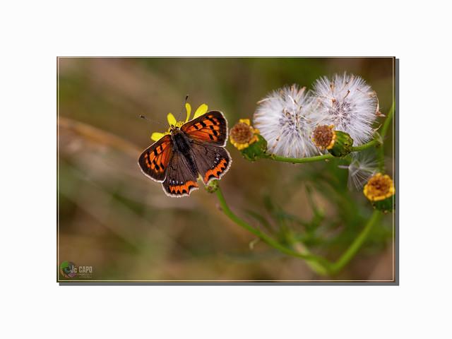 """« Un papillon bleu / Un papillon rouge / Un papillon tremble / Un papillon bouge / Un papillon rose  / Qui vole et se pose / Un papillon d'or / Qui tremble et s'endort""""  Poésie de Pierre Gamarra »"""