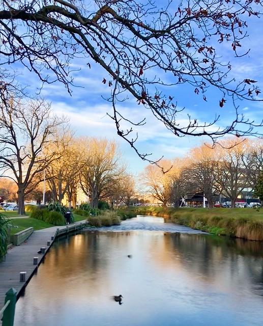 A peaceful stream of little river in the #city #Winter in #Christchurch #Kiwiland #DownUnder #NZ #PureNewZealand #NewZealand