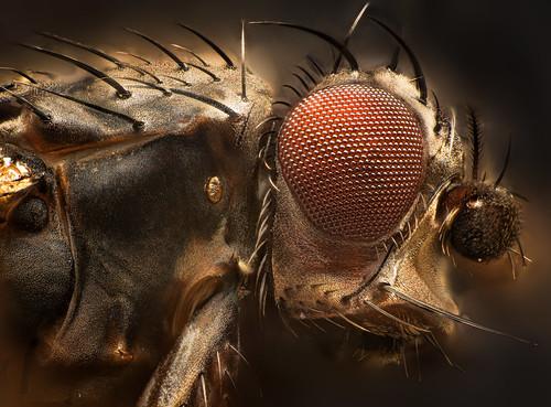 Smal fly