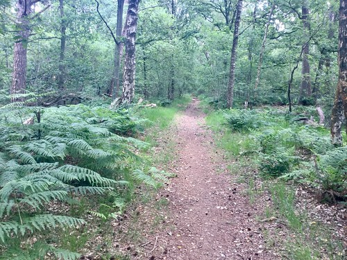 Varens langs het bospad.