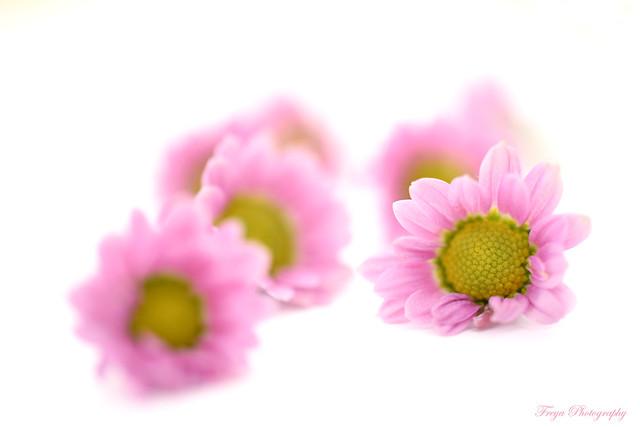 Like a flower...