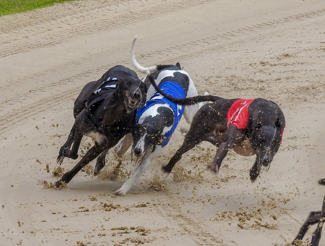 10538 Crayford Greyhounds