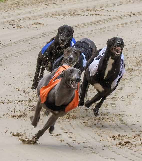10537 Crayford Greyhounds