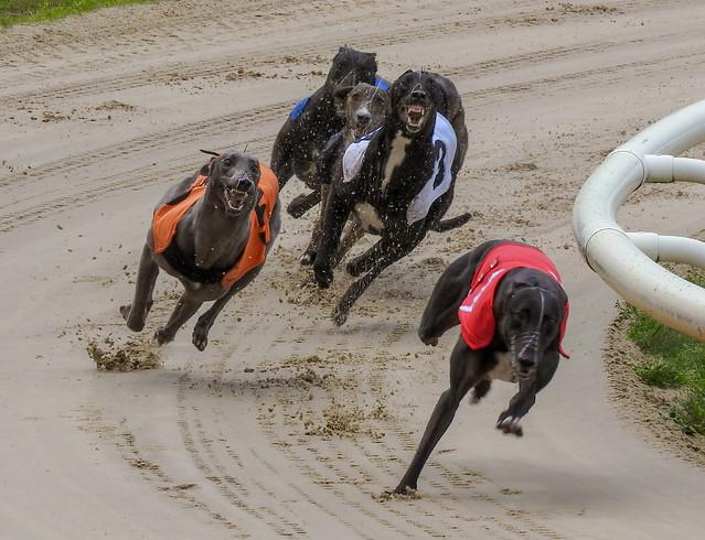 10536 Crayford Greyhounds