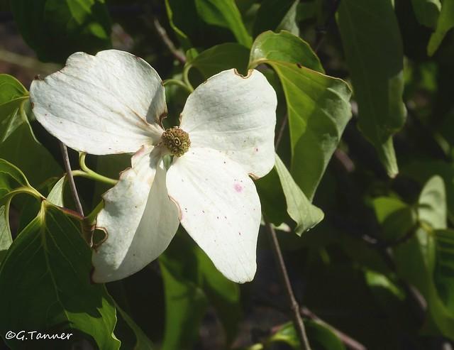 Grüße aus meinem Sommergarten - Teil 1