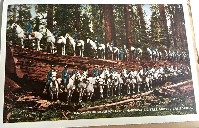 The US Cavalry in Yosemite in 1913