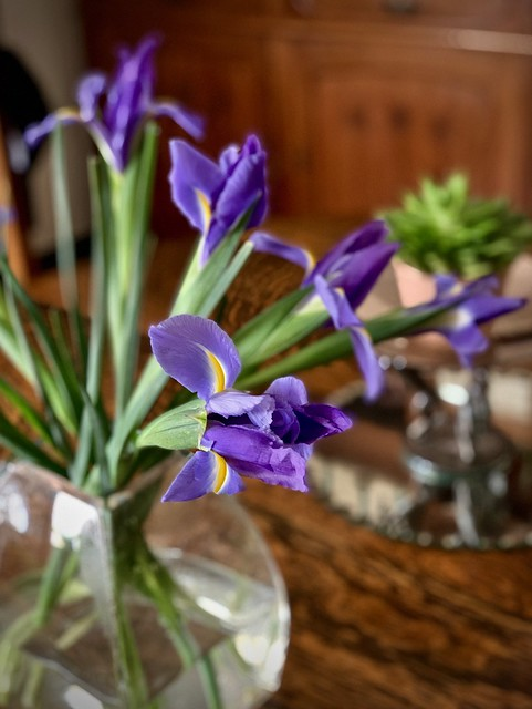 Irises at home