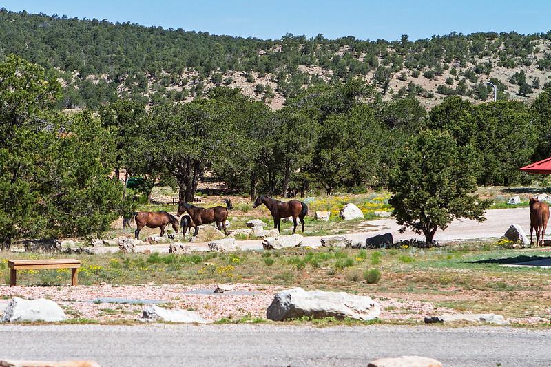 Wild-Horses-21-7D1-070119