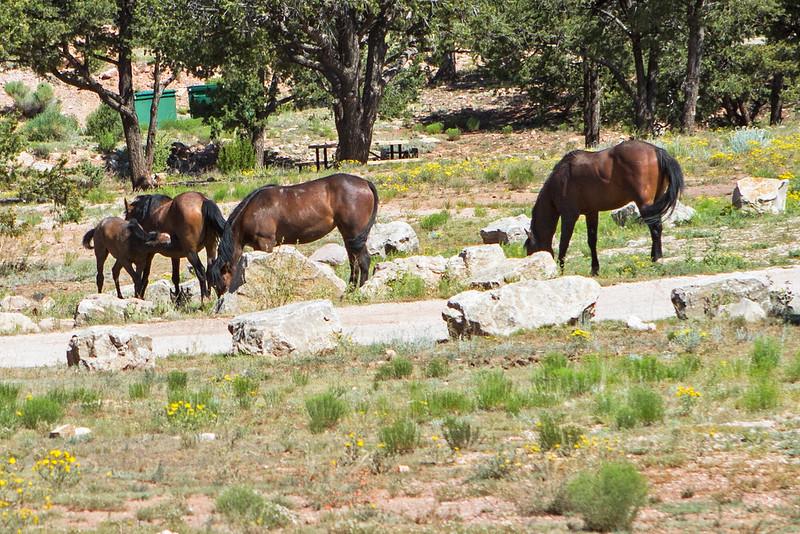 Wild-Horses-25-7D1-070119
