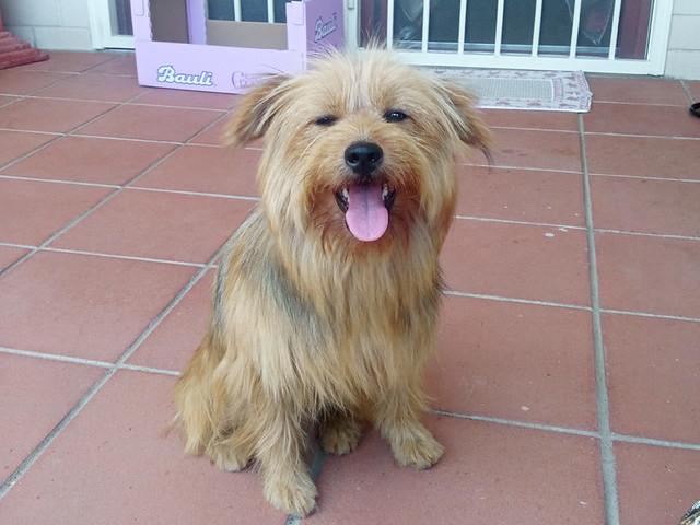 ritrovato cagnolino abbandonato