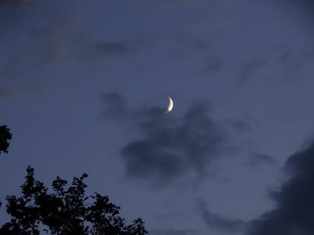 Mondfuß bedeckt